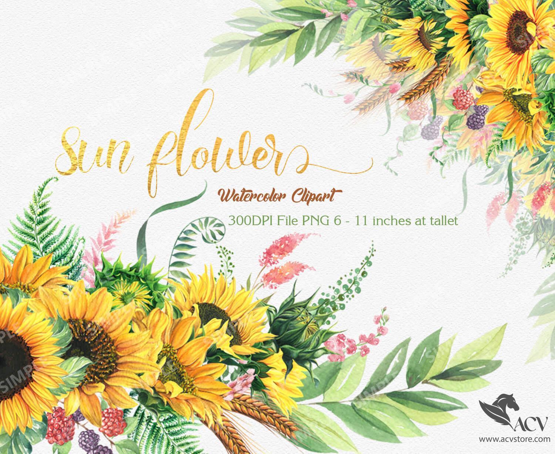 Sunflower Watercolor Flower clipart, Sunflower Wreaths and Bouquets invitation, Sunflower Summer Herb, Wedding Sunflowers clipart    WCSF_2M